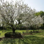 jardin du pavillon vert