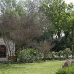 Les lilas du jardin